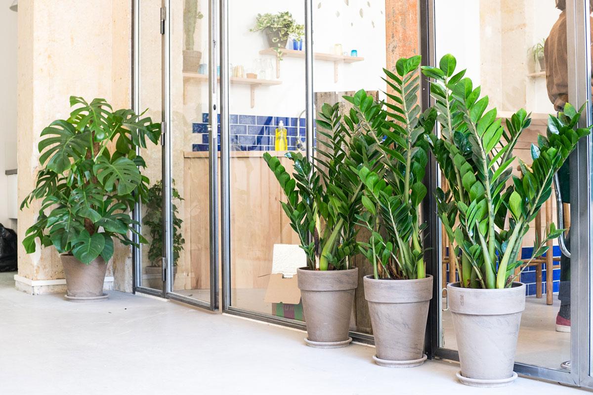 Installation de plantes dans vos espaces professionnels
