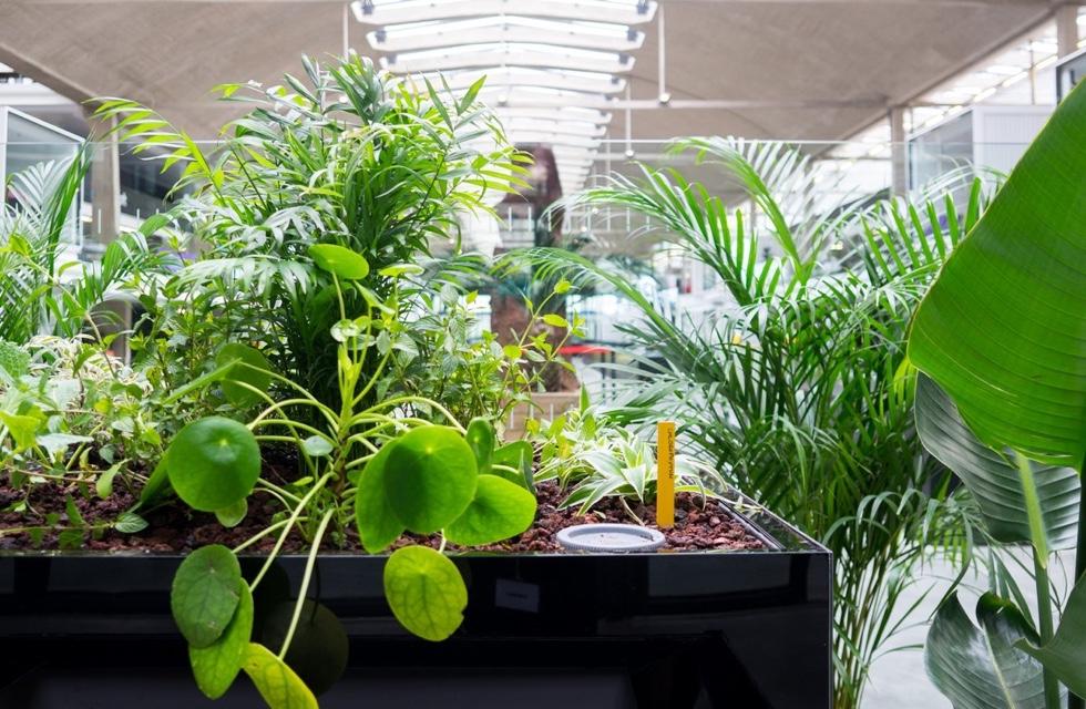 Plantes et installations florales en entreprise